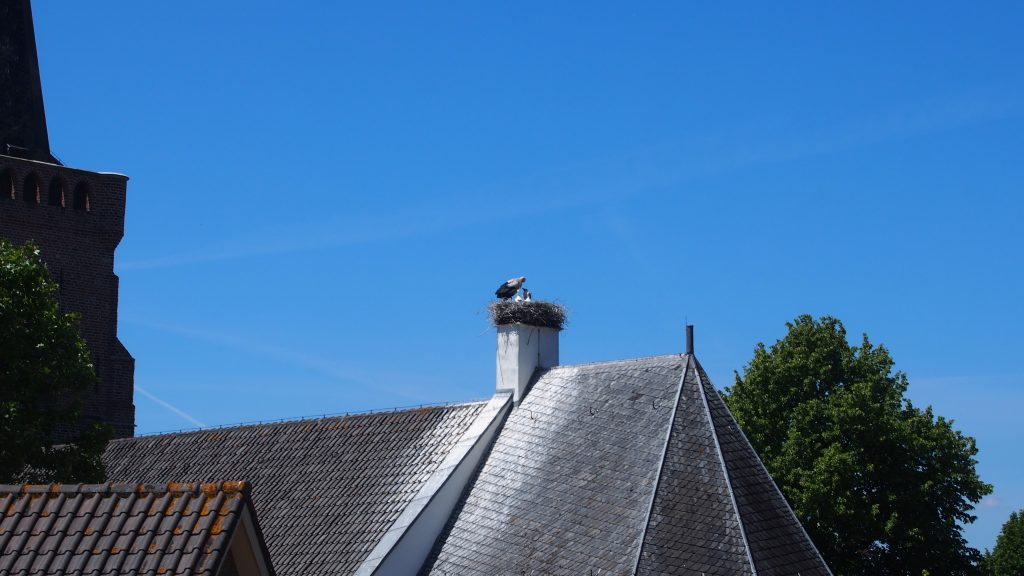Stork with little ones on church roof